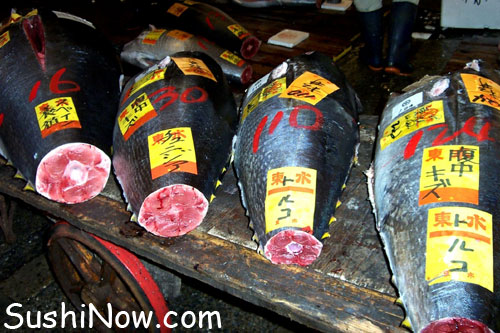 Where to get sushi grade fish all the best fish in 2018 for Sushi grade fish