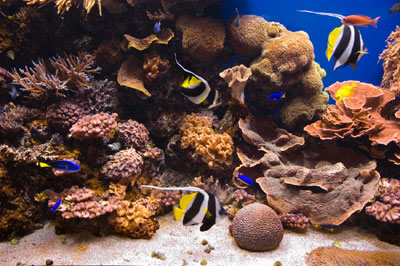 Aquarium Food Saltwater fish Aquarium